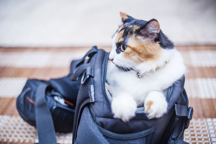 Beauty In Nature Cat Close-up Cute Domestic Animals Domestic Cat Feline Focus On Foreground Furry Hairy  Kitten Mammal Nature Pet Pets Portrait Resting Selective Focus Sitting In Bag Whisker