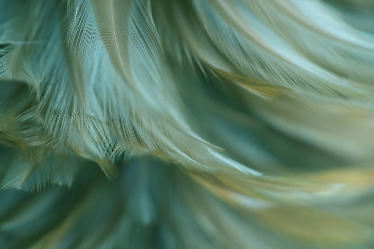 Full frame shot of feather