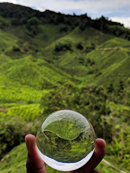 Green Human Hand Mountain Holding Sky Close-up Grass Green Color Landscape Tea Leaves Tea Crop Plantation Hiker Herbal Tea Chinese Tea Teabag EyeEmNewHere