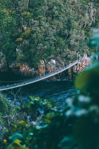 Bridge over river amidst trees