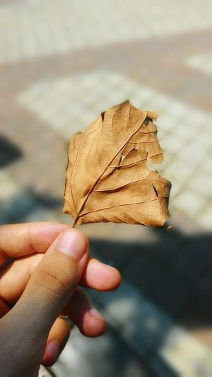 🍂 A Moment Of Zen... Flowers First Eyeem Photo Autumn Autumn🍁🍁🍁 Nice Colors Nature