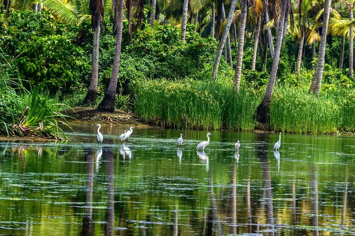 Water Reflection Nature Lake Outdoors Day Kerala Backwaters Animal Themes Beauty In Nature Growth No People Bird Boathouse EyeEm Nature Lover Plant The Week On EyeEm EyeEm Gallery Poovar Kerala, India