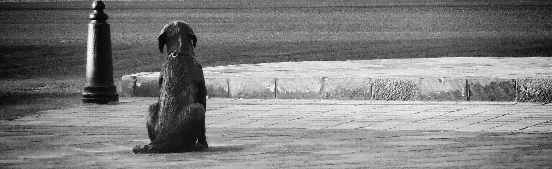 B&w Street Photography Dog statue on pasteur/zaragoza street, here in Queretaro,Mexico Blackandwhite Elperroartista Everybodystreet