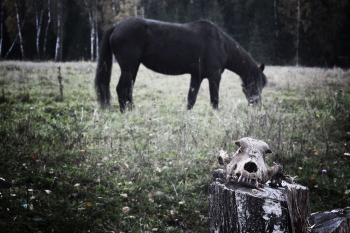666 Death Devil Forest Horse Satan Scull Hardcorelife Europe Black Metal Black Magic Woman Cvlt