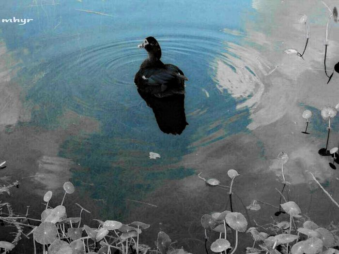Duck! Photography EyeEm Nature Lover Water Reflection sky♥