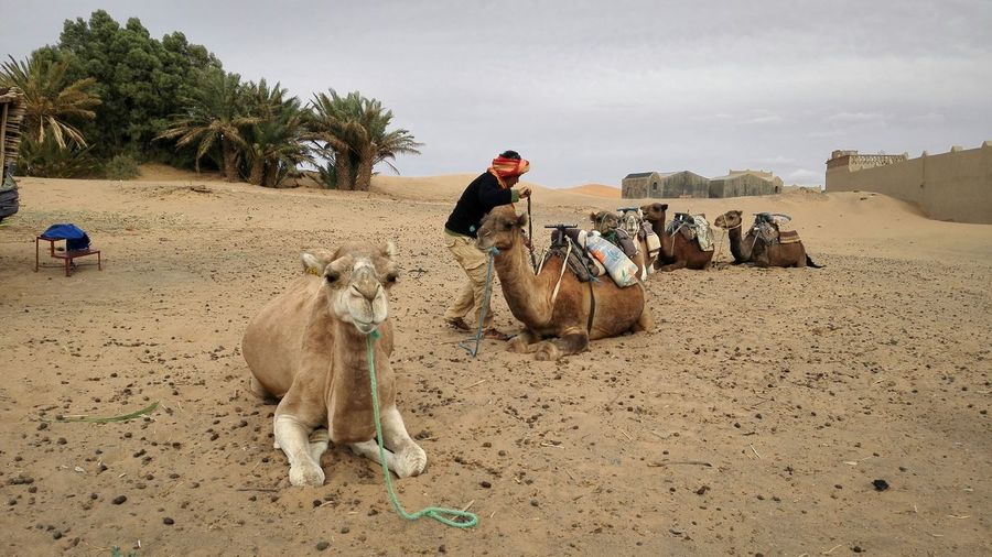Deserts Around The World last night we took an overnight bus from Fes and arrived in Mergouza hello Sahara Desert Camels Travel