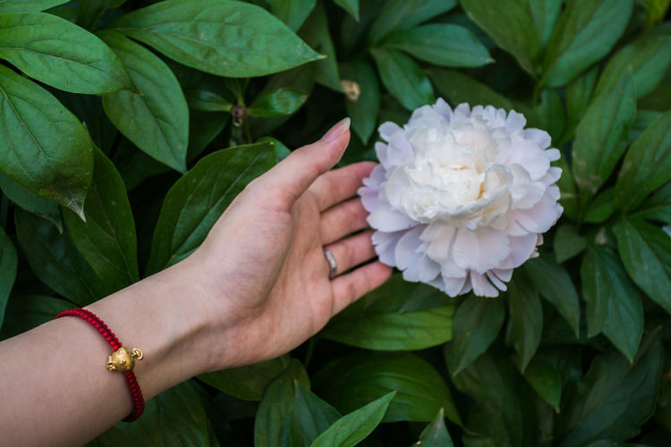 flower Human Hand Hand Human Body Part Plant Leaf Plant Part Flower Real People Green Color Flowering Plant One Person Freshness Vulnerability  Beauty In Nature Nature Close-up Fragility Holding Body Part Women Outdoors Finger Flower Head Human Limb