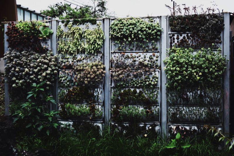 Taking Photos Hanging Out Nature Enjoying Life Green Plants