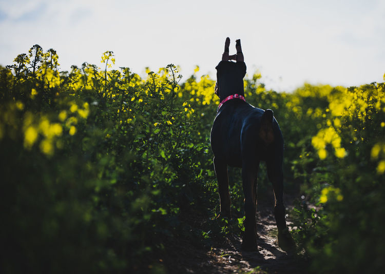 Dog standing in a field