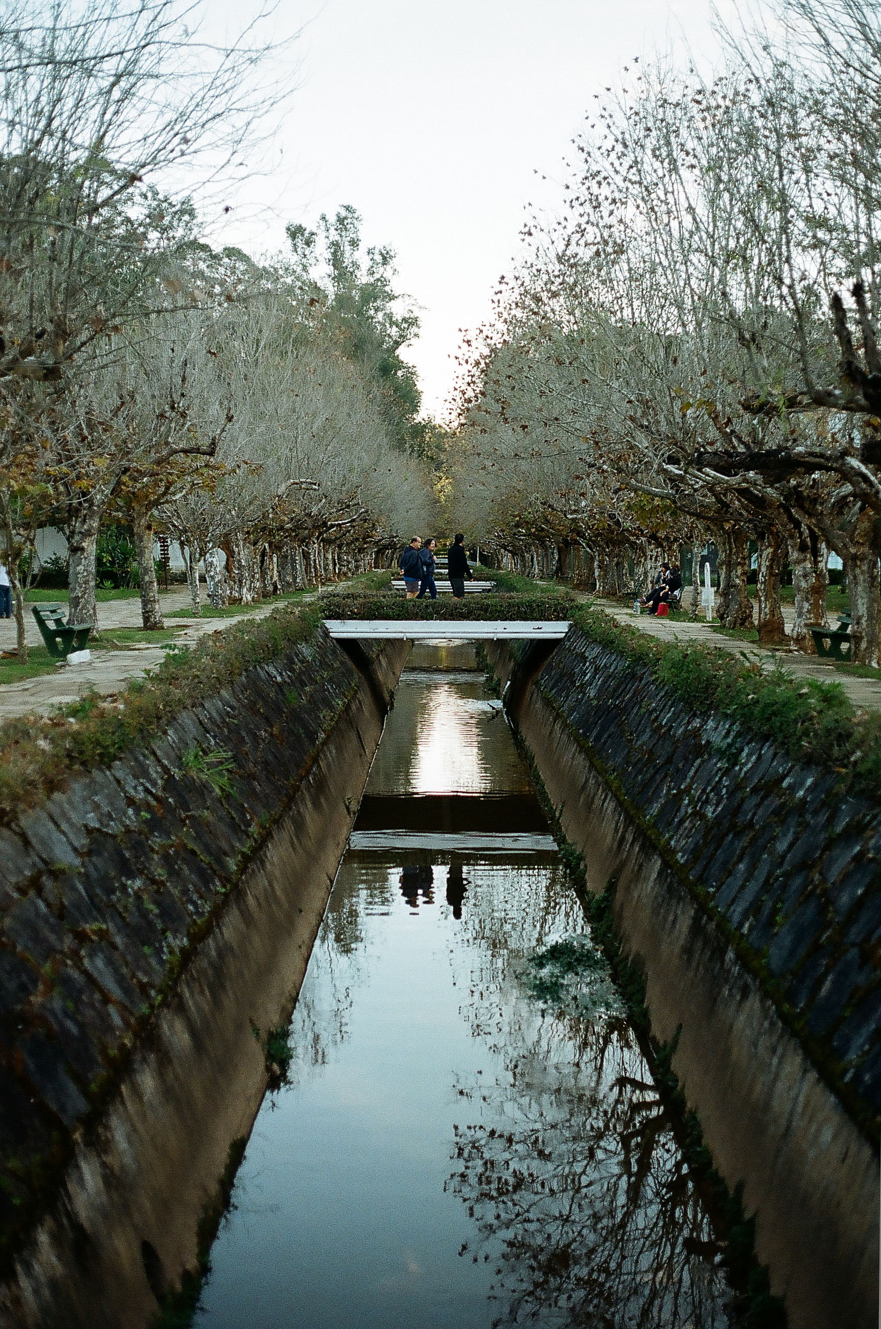 water, tree, nature, reflection, day, canal, growth, beauty in nature, outdoors, sky, scenics, no people, flower