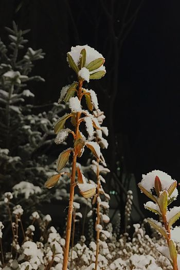 Snow flowers Nature Flower Snow Snow ❄ 보고싶다