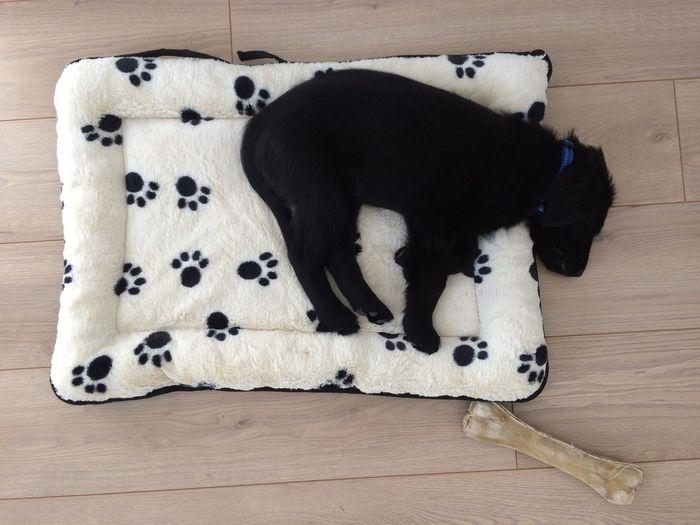 Dog Dog With Large Bone Black Dog Sleeping Dog Puppy Black Puppy