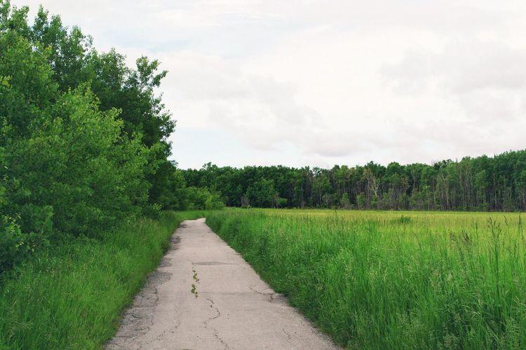 Footpath Leading Towards Grassy Field