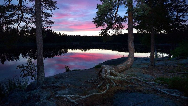 A pine tree in the sunset Enjoying Life Sunset_collection Sunset Tree Lake View Nature Photography Nature_collection Landscape_photography Landscape_Collection Forest Photography öringesjön Sweden Stockholm Tyresö Tranquility Meditation Place No People Water Reflections Sunsetreflections Wide Angle Roots Of Tree