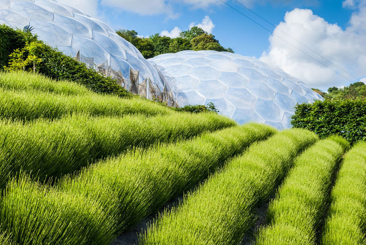 Project Eden, UK Plant Growth Environment Nature Agriculture Tranquil Scene Grass Rural Scene Crop  Outdoors Plantation Architecture Bio-dome Biosphere Botany Eco-system Ecology Project Eden Uk England Conservatory, Artistic Hothouse Hexagon Sphere, Travel Landmark