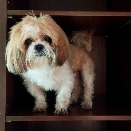 I Love My Dog LovemelovemydogMy Living Companion Mypet