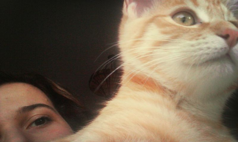 Me and Toffee ! Cat Socute Animals Portrait