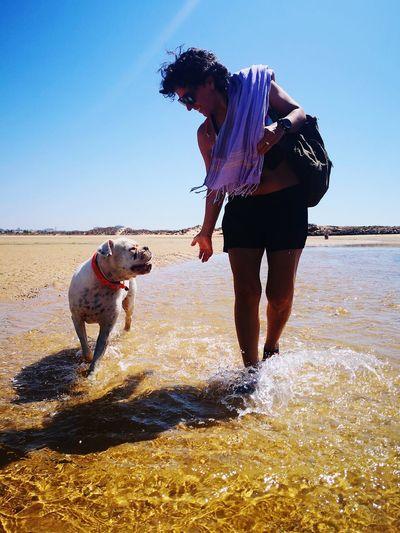 Pets Beach Full