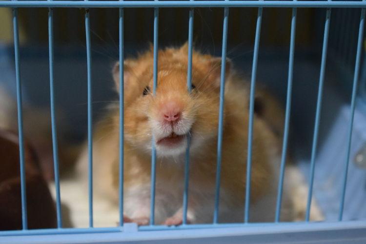 Hamster Goldenhamster Hamster Love Photography Animalphotography Art EyeEm