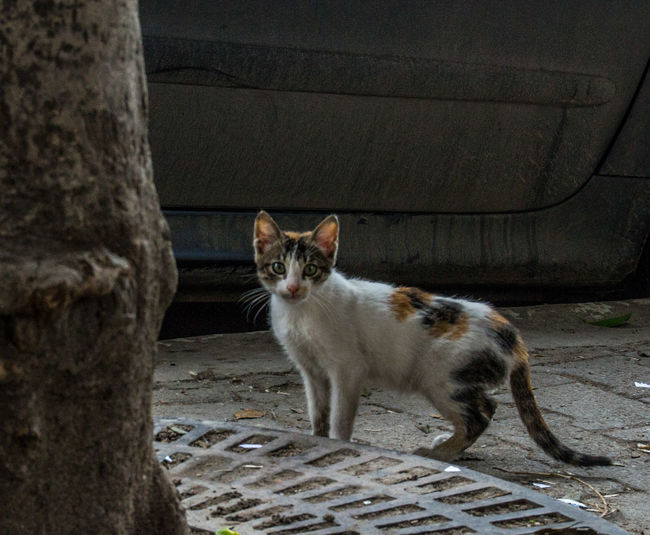 Small cat City Tunis Tunisia Animal Themes Day Domestic Animals Domestic Cat Feline Looking At Camera Mammal No People One Animal Outdoors Pets Portrait Street Tunisie