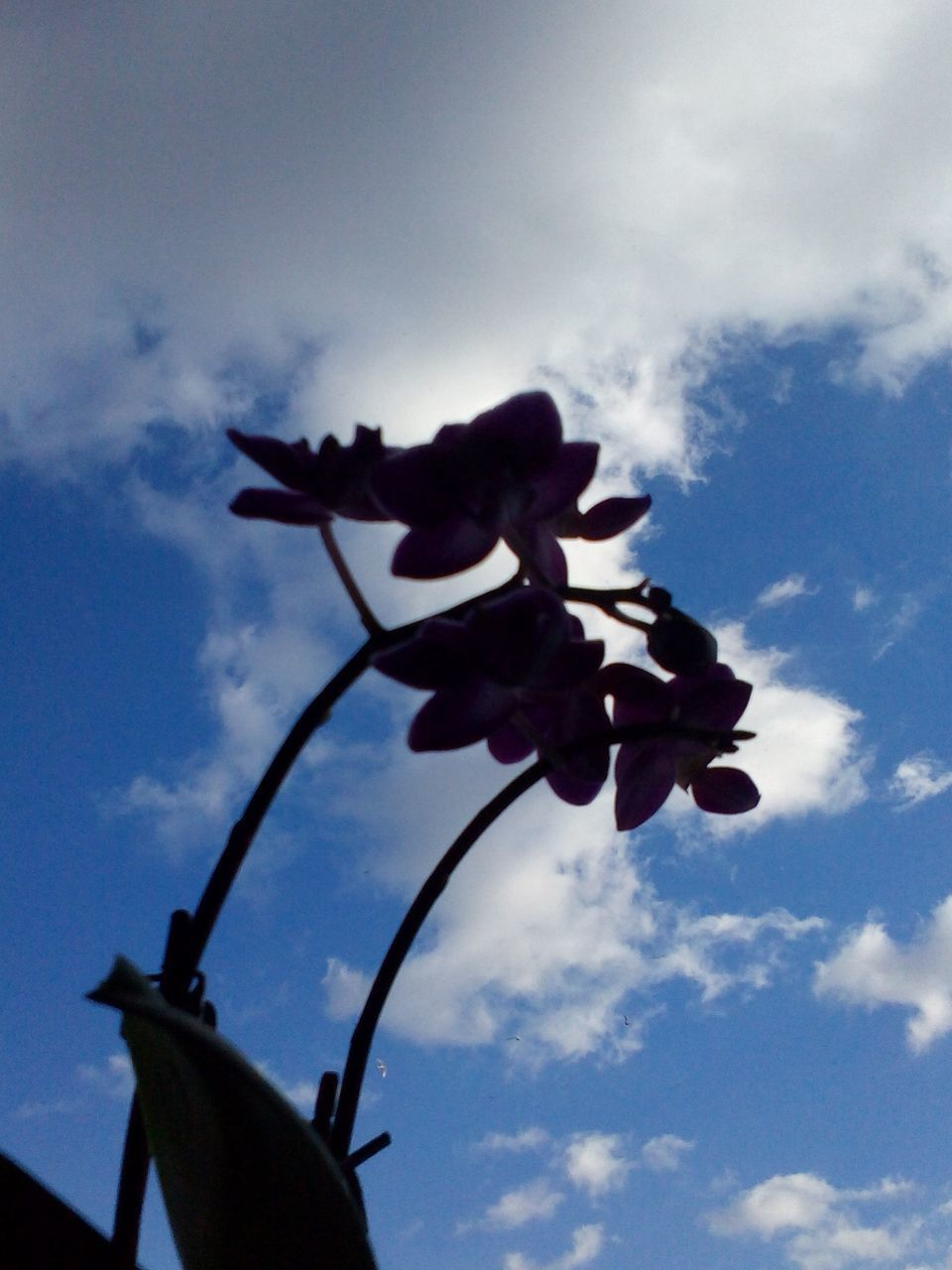 Low Angle View Of Silhouette Flowers Blooming Against Sky
