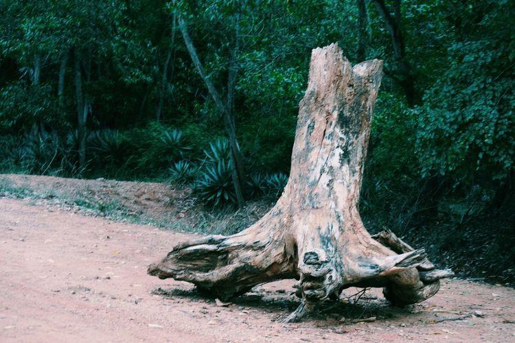 Tree trunk on field in forest