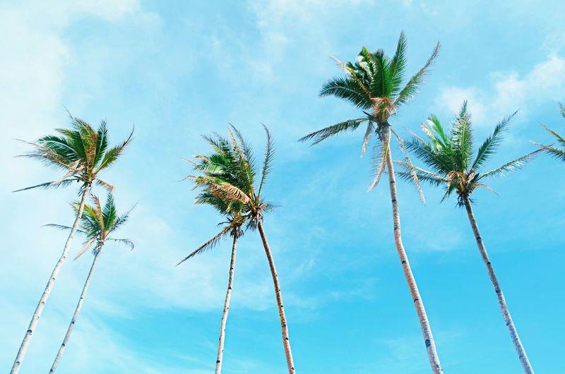 Coconutnut
