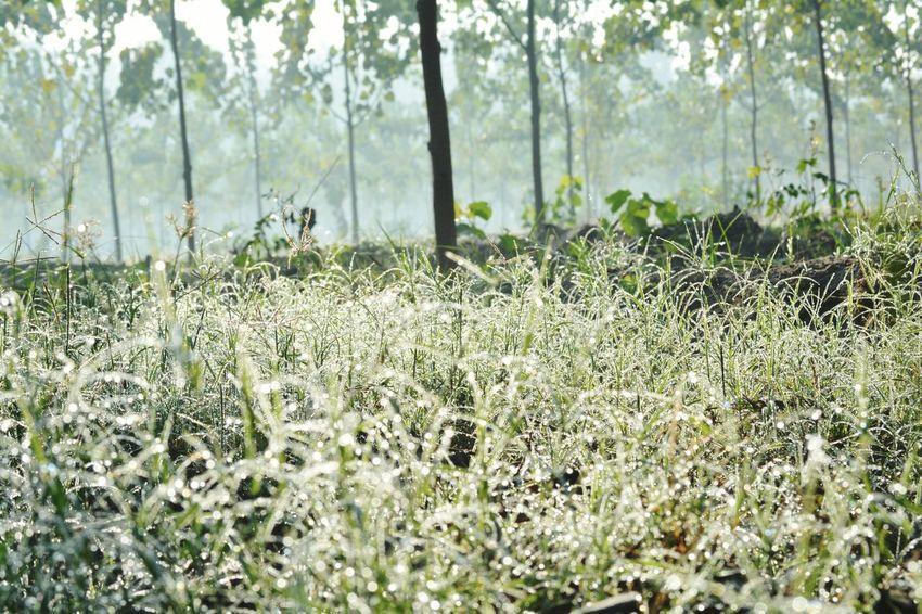 Morning, dew, fresh, field
