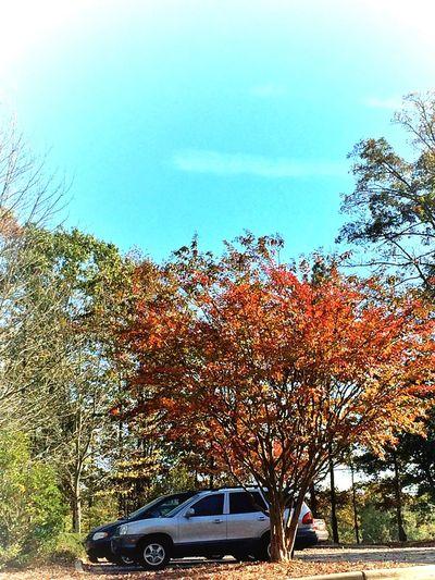Beautiful Day Autumn Leaves Favoriteseasonoftheyear