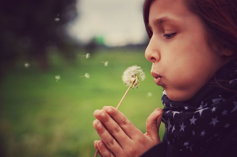 Close-Up Of Girl Blowing Dandelion Seeds