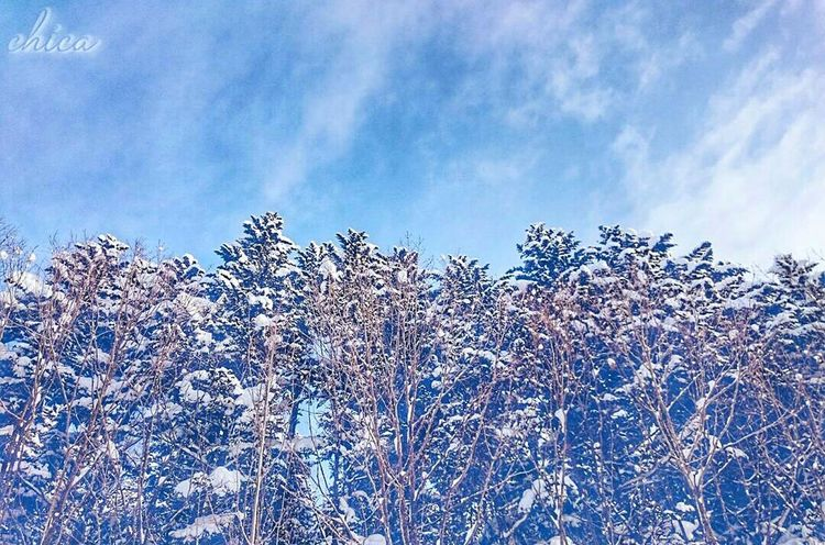 Always in your heart💘 Sky Nature Tree Cloud - Sky No People Outdoors Low Angle View Beauty In Nature Naturelandscape 林 Snowlandscape Winterlandscape Snow Winter Japan Blue Sky Hokkaido 北海道 樹 木 自然 Snowing