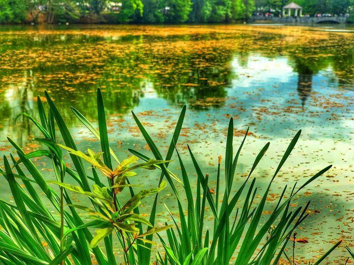 Plants growing in lake