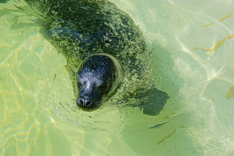 High angle view of seal in lake