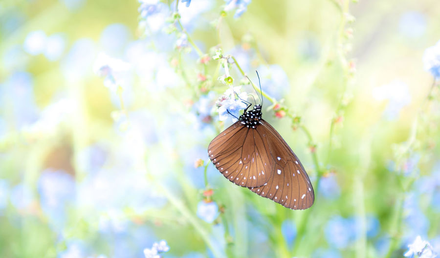 Butterfly pollinating flower