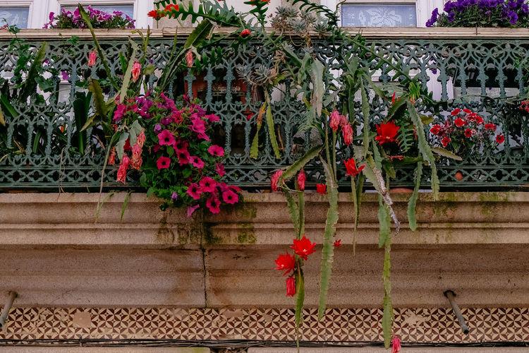 Red flower pot on railing against plants