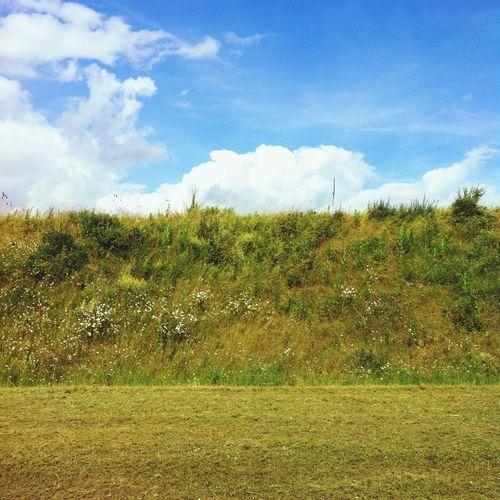 Clouds Grass