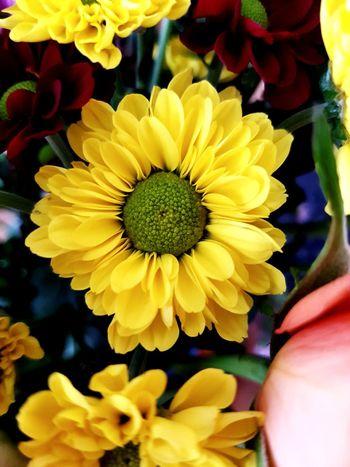 EyeEm Selects EyeEm Best Shots EyeEmNewHere EyeNatureLover Flower Head Flower Multi Colored Yellow Petal Sunflower Springtime Close-up Plant Blooming Zinnia  Gerbera Daisy In Bloom Black-eyed Susan Blossom