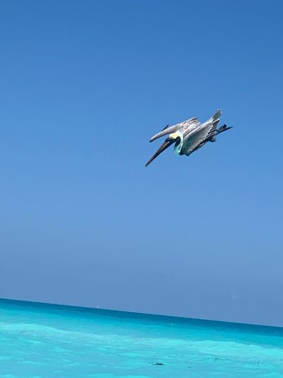 Water Sea Blue Sky Nature Flying Air Vehicle Clear Sky Horizon Over Water Day No People Horizon Mid-air Motion Outdoors Turquoise Colored