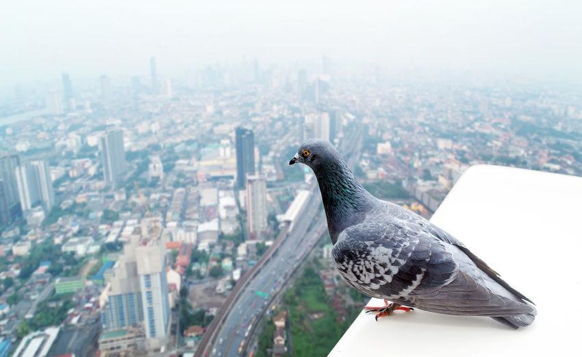 Bird in a city