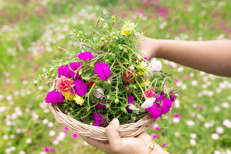 Midsection of person holding purple flowering plant in basket