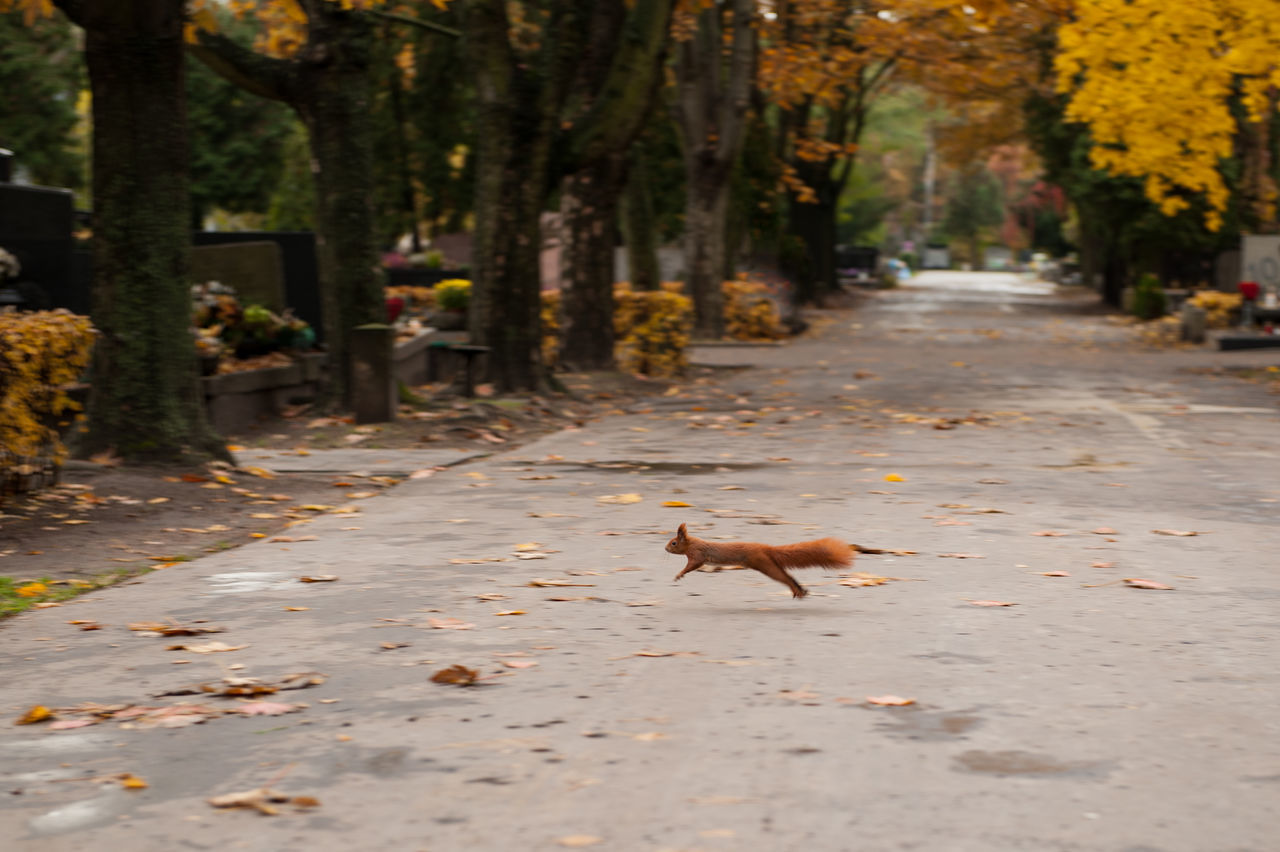 one animal, animal themes, autumn, leaf, nature, domestic cat, outdoors, tree, pets, mammal, no people, day, domestic animals, the way forward, feline