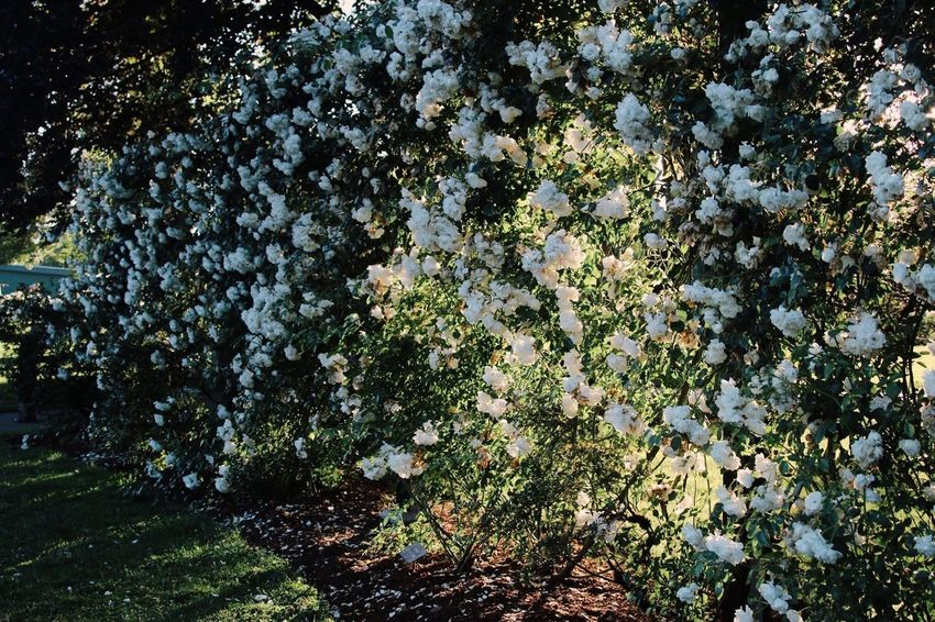 Beauty In Nature Close-up Day Flower Fragility Freshness Growth Nature No People Outdoors Plant Scenics Tranquility Tree