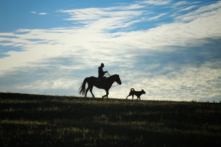 Cloudy Sky Dog And Horses Horse And Rider Silouette & Sky Silhouettes Blue Sky Morning Horse Riding Landscapes Enjoying The View Morning Light Landscape The Great Outdoors - 2016 EyeEm Awards On The Road Travel Quiet Moments Nature Photography Horses Abstract Grassland