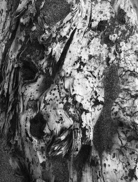 Abstract Nature Nature Photography Nature Perspective Shapes In Nature  Abstractions TreePorn Landscape #Nature #photography Black And White Sand Driftwood Beach Views Dry Still Life