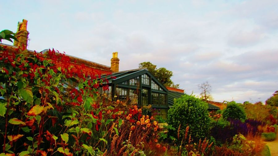 2017 Cloud - Sky Autumn Plant Architecture Built Structure Building Exterior Glasshouse Flowers October2017🍂🍁💛 National Trust 🇬🇧 October Wimpole Hall, Walled Garden Dahlia Garden Growth Flower Architecture Wimpole Estate