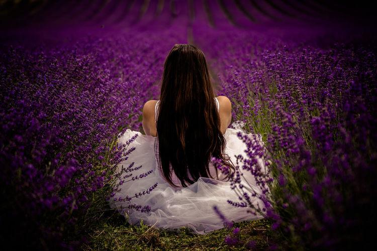Rear view of bride sitting on lavender farm