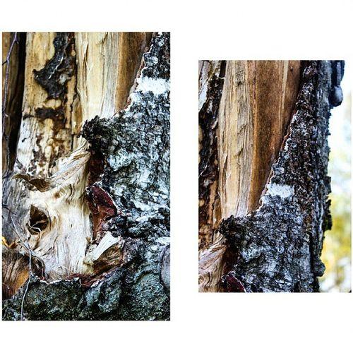 природный_фотоспам Природа осенний_лес рекшино