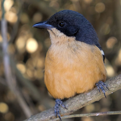 Animal Themes Animal Wildlife Animals In The Wild Beautiful Bird💓 Bird Close-up Day EyEmNewHere Love Nature Photography Love Nature🌲 Nature No People One Animal Outdoors Perching Robin