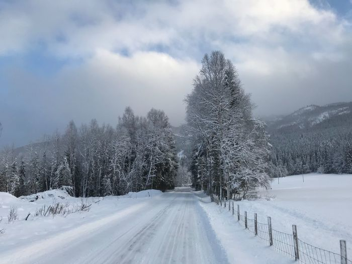 Tranquility White Color Scenics Sky Landscape Tree Tranquil Scene Outdoors No People The Way Forward Day Cloud - Sky Road Transportation Shades Of Winter