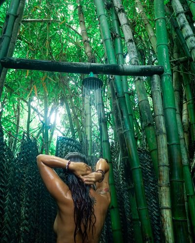 Rear view of shirtless woman taking showing amidst bamboo